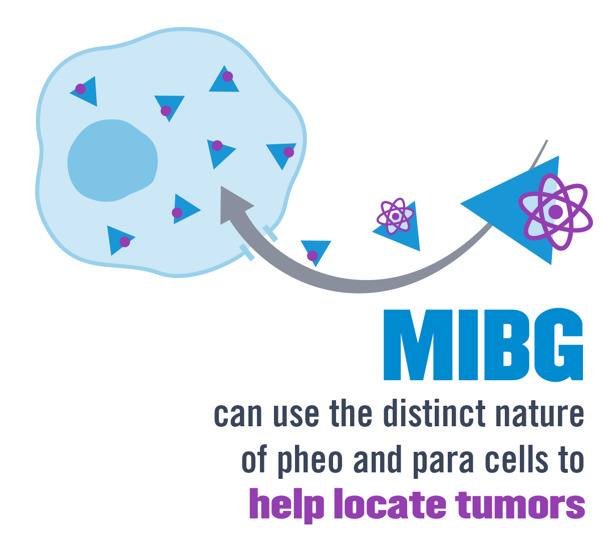 MIBG is a molecule that can be used to find pheo and para.