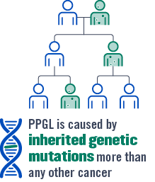 PHEO/PGL is caused by inherited genetic mutations more than any other cancer.