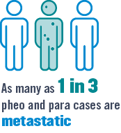 As many as 1 in 3 pheo and para cases are metastatic malignant.